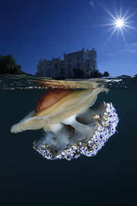 La Méduse et le château